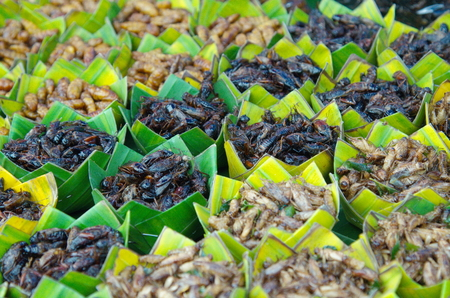 Food insect sold in the rural market Thai.