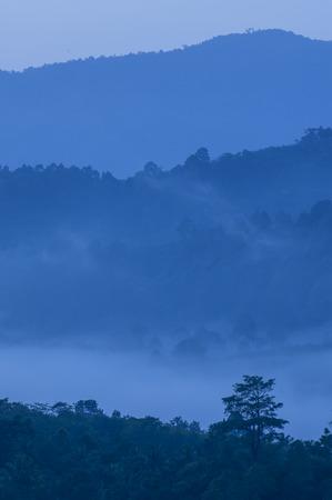 dense: morning fog in dense tropical rainforest, thailand