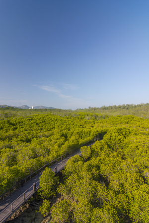 lightsome: The forest mangrove at Petchaburi, Thailand.