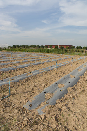 plots: vegetable plots in Thailand Stock Photo