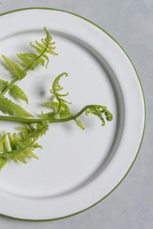 scurvy: Vegetable fern (Diplazium esculentum).