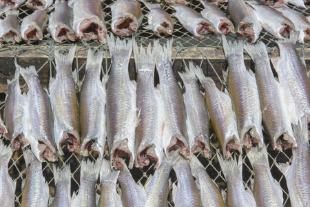 sparus: Flathead mullet, Grey mullet, Striped mullet Stock Photo