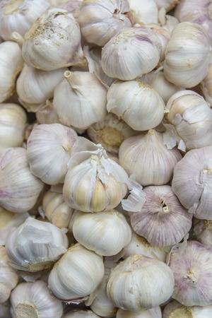 allium: Common Garlic, Allium ,Garlic, Allium sativum L.
