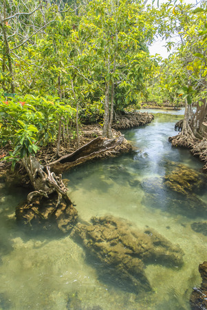 Crystal stream clear freshwater meets with seawater from the mangrove forest Krabi Thailand