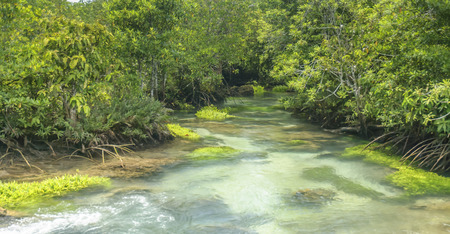 thapom: crystal stream clear freshwater meets with seawater from the mangrove forest Krabi Thailand