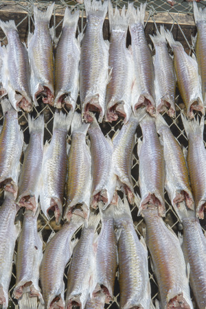mullet: Flathead mullet Grey mullet Striped mullet Stock Photo