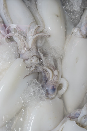mollusca: Fresh squid at fresh market Thailand