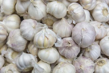 allium: Common Garlic Allium Garlic Allium sativum L. Stock Photo