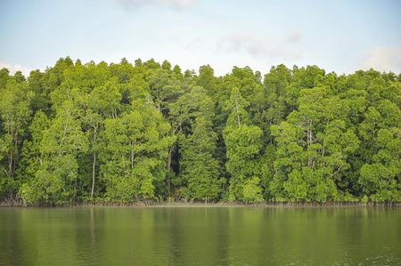 wilding: Mangrove forest