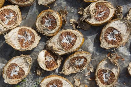 areca: Dried Betel Nut or Areca Nut.