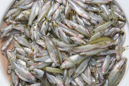 Pesce piccolo cibo locale del paesano Thailandia Archivio Fotografico - 39504661