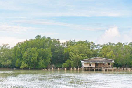 adress: House riverside in mangrove forest with blue sky and cloud Stock Photo