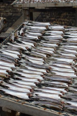 nakhon: Dried fish, Pak Phanang District, Nakhon Si Thammarat Thailand