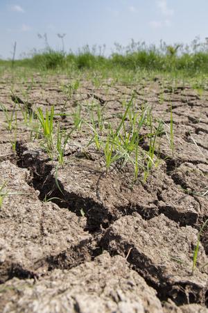 Crack soil on dry season, Global worming effect. Stock Photo