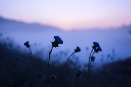 silhouette of flowers and plants on a background sunset. Shallow depth of field and cold tone
