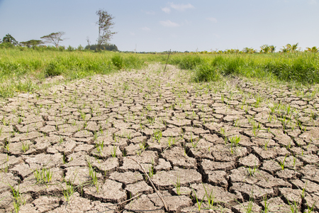 Crack soil on dry season, Global worming effect. Stock Photo