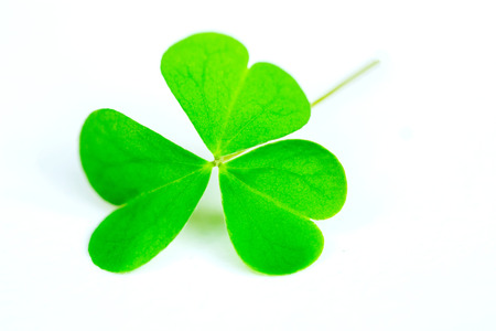 Creeping woodsorrell (Oxalis corniculata), isolated green leaf clover on white, lucky Stock Photo