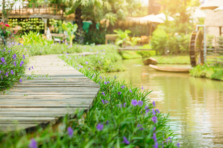 selective focus to wooden bridge and side blossom purple flower and bud of Waterkanon in the garden