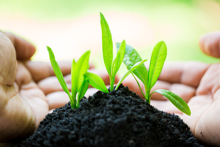 seedling in hands  with abundance soil and blurry green background with sun light, growth concept, startup concept, spring concept, nature and care.