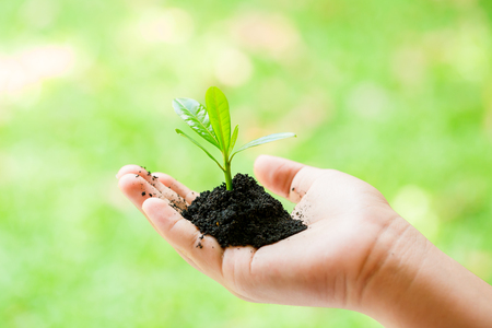seedling in hand of kid and dad with abundance soil and blurry green background with sun light, growth concept, startup concept, spring concept, nature and care.