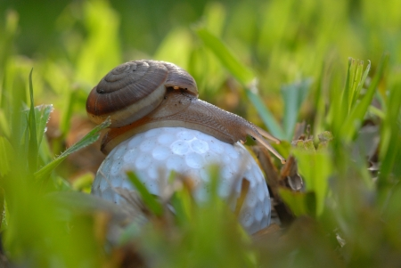 slack: Snail on a  golf ball Wait a long time for the next shot