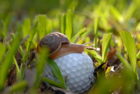 snail on a  golf ball Wait a long time for the next shot  photo