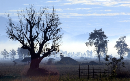 Tree silhouette in the morning.Rural northern Thailand. photo