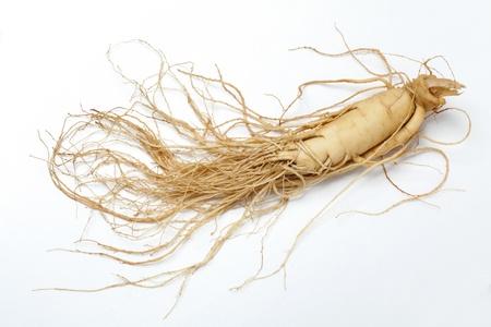 planta con raiz: ra�z de gins�n