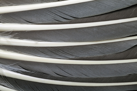 lamellar: feather background