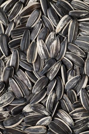 semillas de girasol: Semillas de girasol Textura