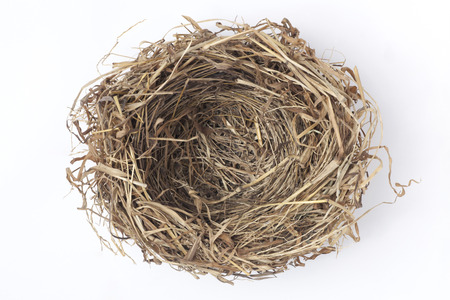 Empty bird nest on white