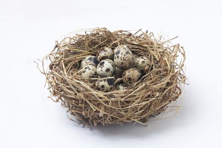Quail eggs in a nest photo