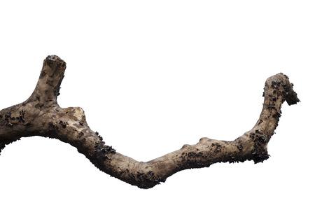 dead wood: Dry tree branch