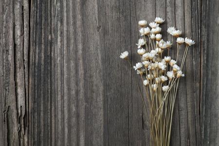 flores secas: seca margaritas silvestres en un viejo fondo de madera