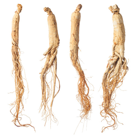 dry ginseng roots isolated on white