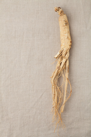 dry ginseng roots on the burlap