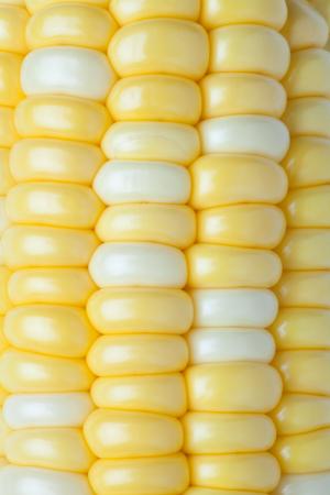 corn: Close-up of corn Stock Photo