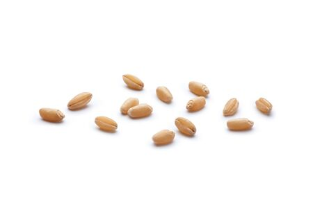 Close-up of wheat grains isolated on white background