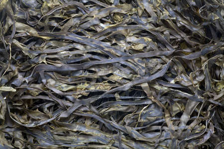 Close-up of dried kelp. Food background.