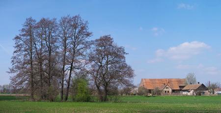 derelict: Agriculture,derelict farm  under trees