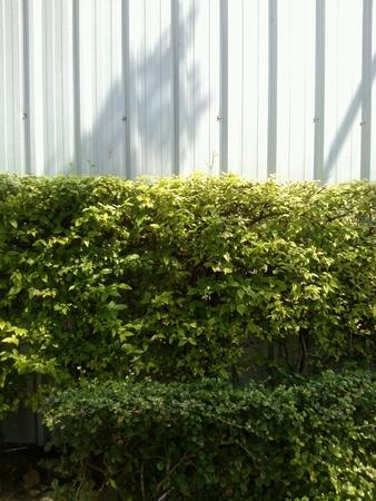 sidelong: Sideways hedge Stock Photo