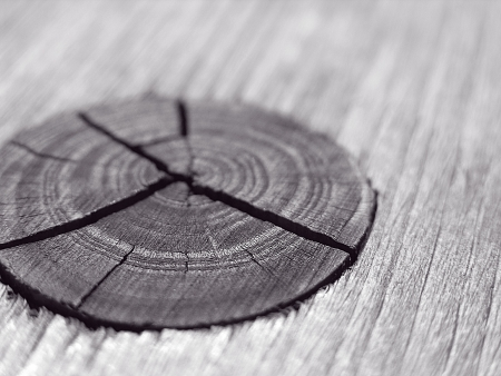 Old wood cut texture with knot photo