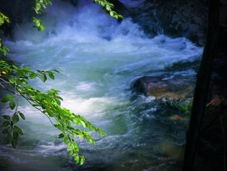 돌과 물과 mornig 숲에서 스트림
