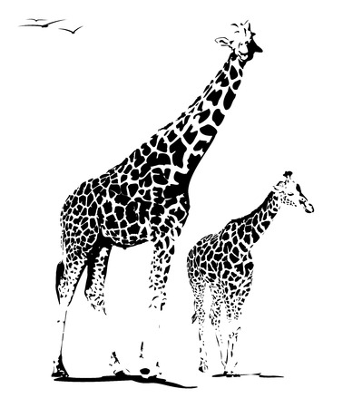illustration of mother and young giraffe, isolated on white
