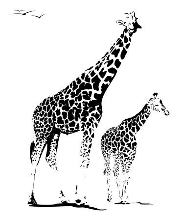 어머니와 어린 기린의 그림, 흰색에 고립