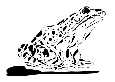 siluettes: Frog Illustration, white background