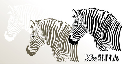 illustration of zebra isolated on white background illustration