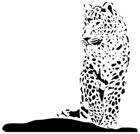 black and white panther: Isolated black jaguar on white background - illustration Illustration