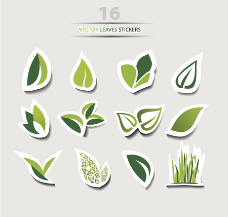 Vector leaf Icons set isolated on white, collection with shadow