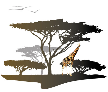 savannah: Color giraffe on savannah with silhouette of africa trees, illustration isolated on white